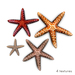 Textures%20starfish