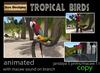 Tropical%20birds
