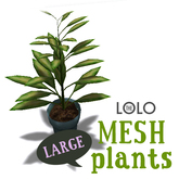 LOLO Potted House Plant #6 (100% mesh, counts as 4 prim)