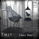 Falln Caged Raven