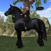 AKK XL 09 Friesian Horse