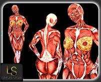"""LS Muscle """"no skin"""" Female"""