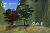[ Organica ] Oak 8