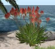 CJ Flower Aloe orange Lupinen
