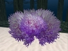 Purple coral, one prim, boxed.