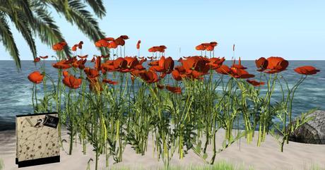 CJ Red Poppys - 4 Plant in 1