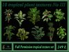 Tropicalplants3png
