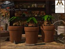 Mayallivanders Organic Mandrakes