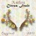 TBF Antlers - Citrus Fruit