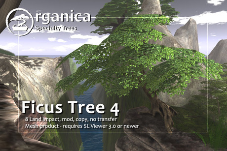 [ Organica ] Ficus 4 package