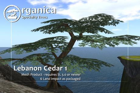 [ Organica ] Lebanon Cedar 1