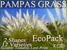 25 KIDD PAMPAS GRASS * 12 Varieties Options * 2 Shapes * Sizable * Tintable