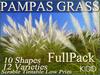 75 KIDD PAMPAS GRASS * 12 Varieties Options * 10 Shapes * Sizable * Tintable
