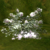 crystal rose  Amethyst