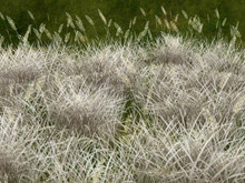 Winter Weed field type