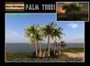 100L OFF!Palm trees set