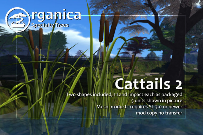 [ Organica ] Cattails 2 package