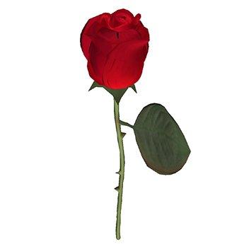Single Red Prim Rose in a Gift Box