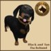 Vkc dachshund market place advert 02
