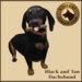 Vkc dachshund market place advert 05