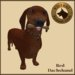 Vkc red dachshund market place advert 02