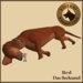 Vkc red dachshund market place advert 04
