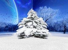 Snowy pine5