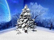 Snowy pine 1