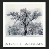 AFantasy Black & White Tree by artist Ansel Adams Framed Poster Art