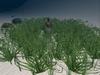 Ocean  Seaweed Field,  1 multiface LOD prim.
