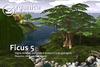 Ficus5 vendor