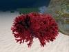 Ocean  Red Seaweed,  1 multiface LOD prim.