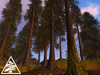 coniferous forest - spruce 12pcs M/T