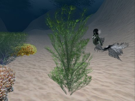 Animated, Sculpted Seaweed 1.