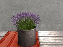 Dutchie mesh low prim plants: Lavender 3