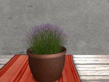 Dutchie mesh low prim plants: Lavender 1
