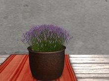 Dutchie mesh low prim plants: Lavender 4