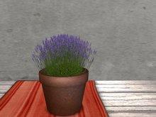Dutchie mesh low prim plants: Lavender 2