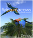 :: 2Xtreme :: red and blue free flying macaw