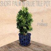 Domicile: Short Palm in Blue Tile Pot