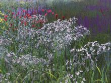 SDS Windy Wild Flowers