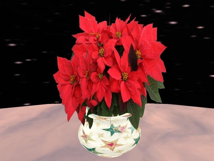 Poinsettia 8, red