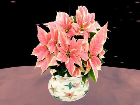 Poinsettia 3, pink
