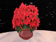 Poinsettia 6, red