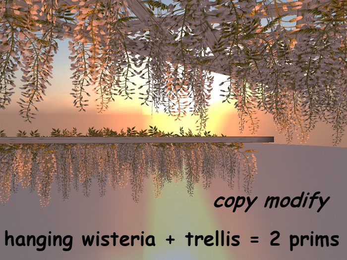hanging white wisteria + animated C/M