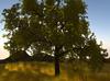 Tree%20green2
