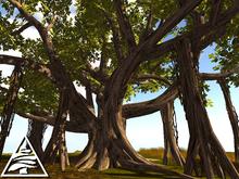 banyan tree 18 prims C/M