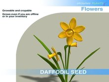 Growing Plants – Mesh Growable and Cropable  Daffodil