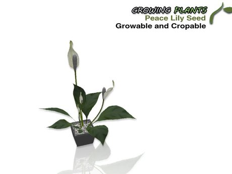 Growing Plants – Mesh Growable and Cropable Peace Lily