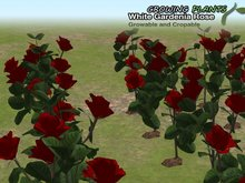 Promotion!!!  Growing Plants – Mesh Growable and Cropable Red Gardenia Rose